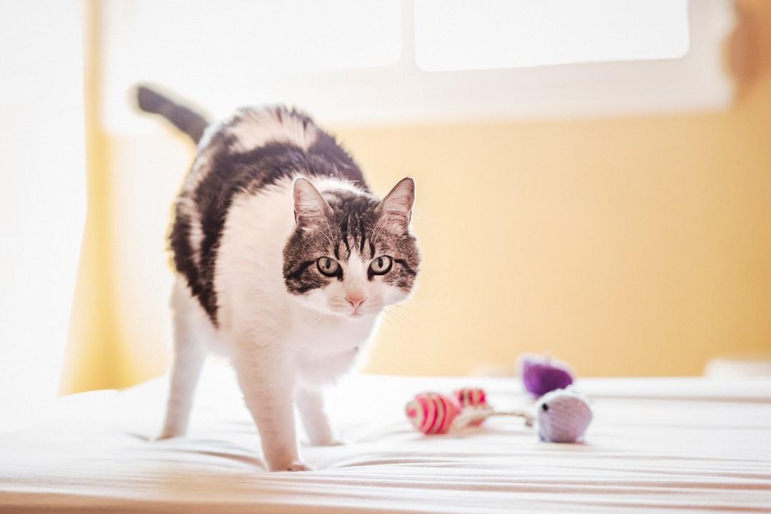 fotografo de mascotas 043-elsmagnifics-MuffinIzoku