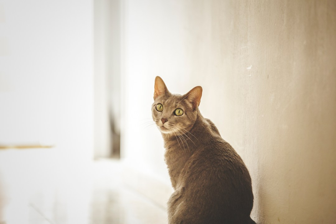 gata mira a cámara
