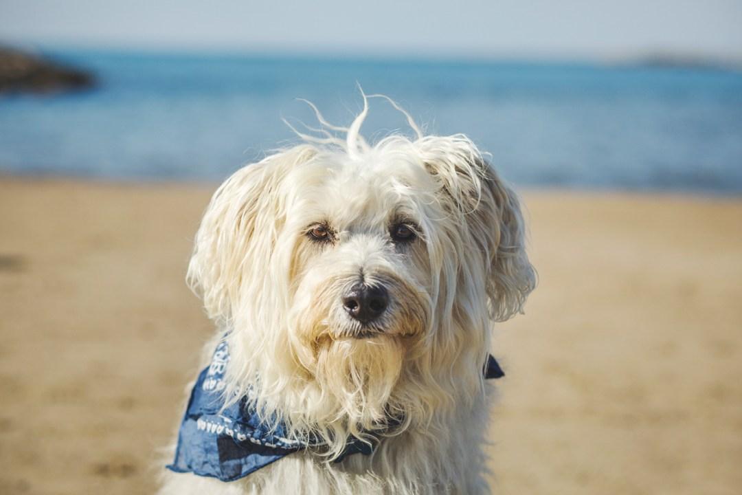 retrato gos d´atura