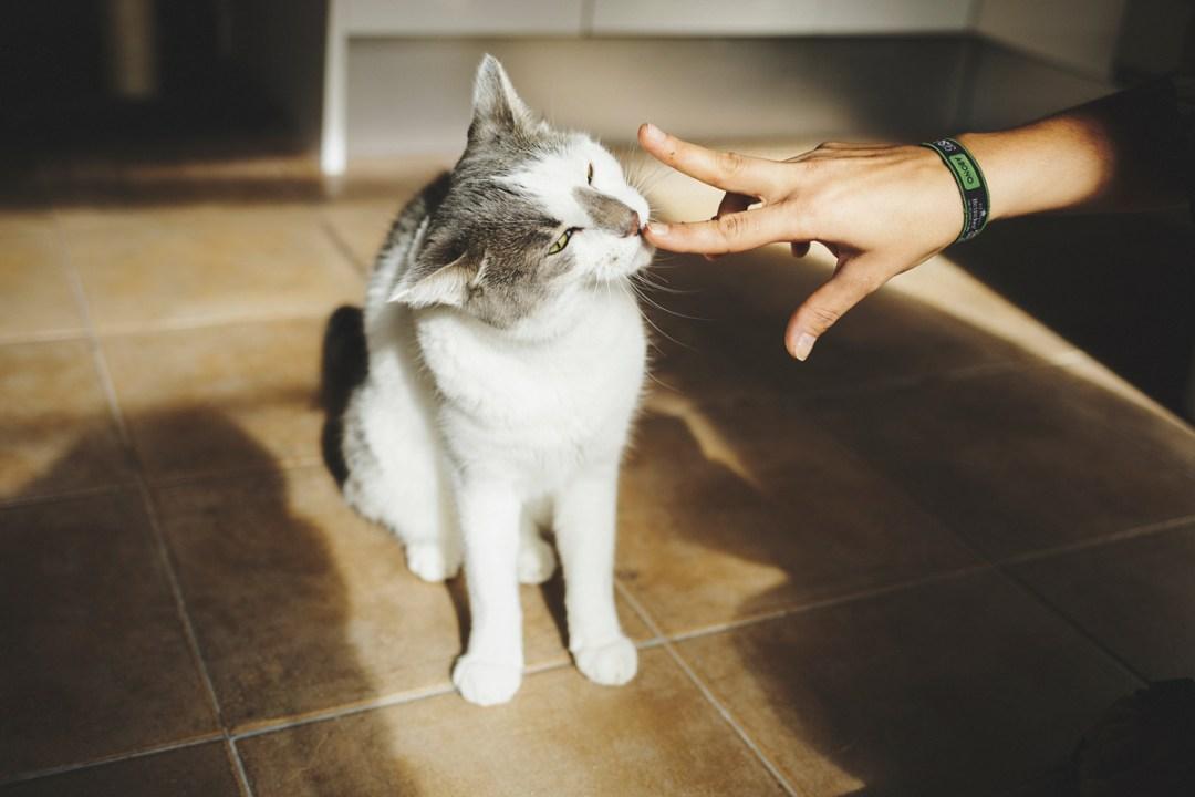 fotografo-de-mascotas-011-els-magnifics_gatos-lonabrugi