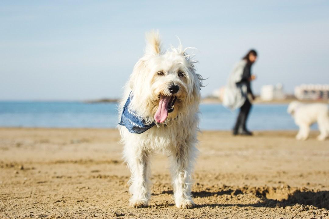 fotografo-de-mascotas-011-els-magnifics_perro-williemaggie