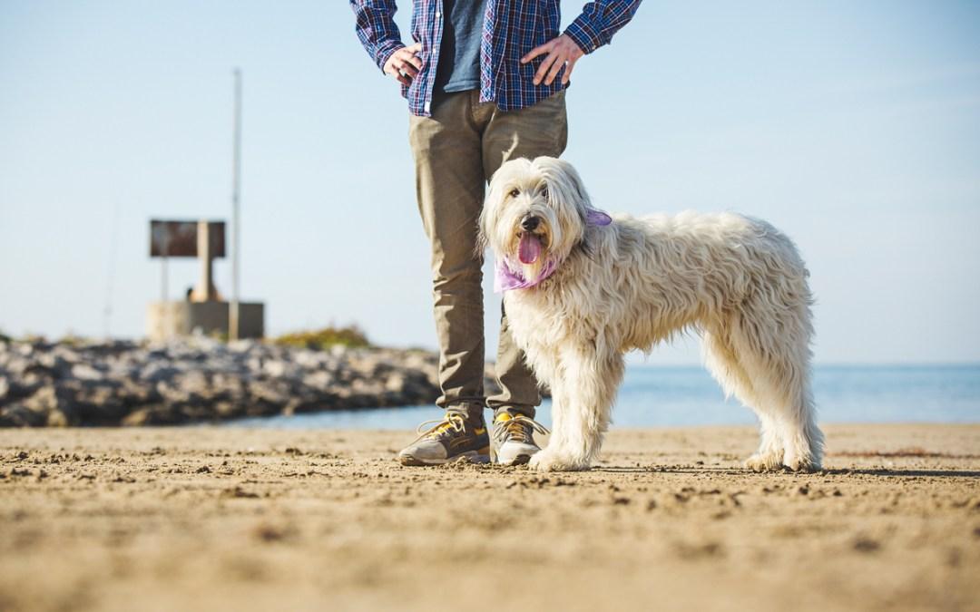 Fotógrafo de Mascotas «Un tándem perruno muy peculiar: Willie&Maggie»