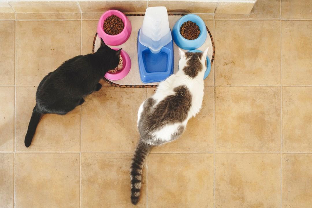 fotografo-de-mascotas-021-els-magnifics_gatos-lonabrugi