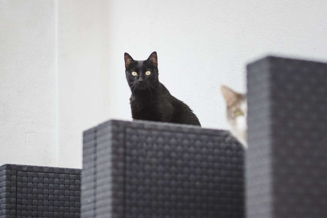 fotografo-de-mascotas-029-els-magnifics_gatos-lonabrugi