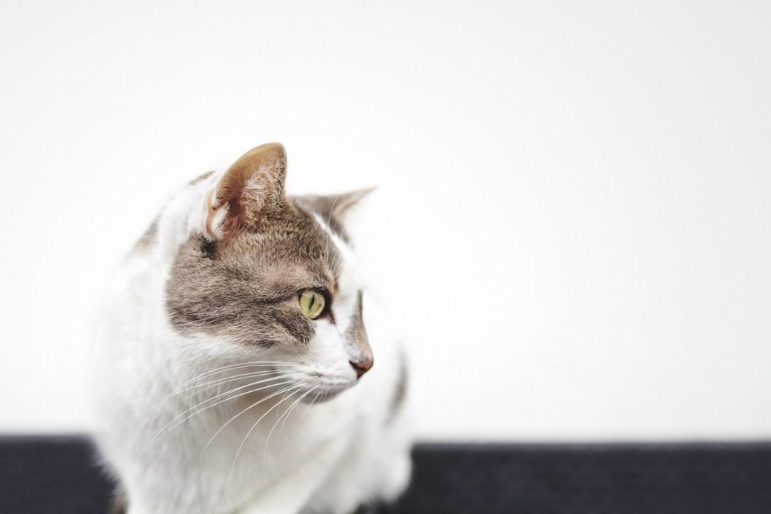 fotografo-de-mascotas-030-els-magnifics_gatos-lonabrugi