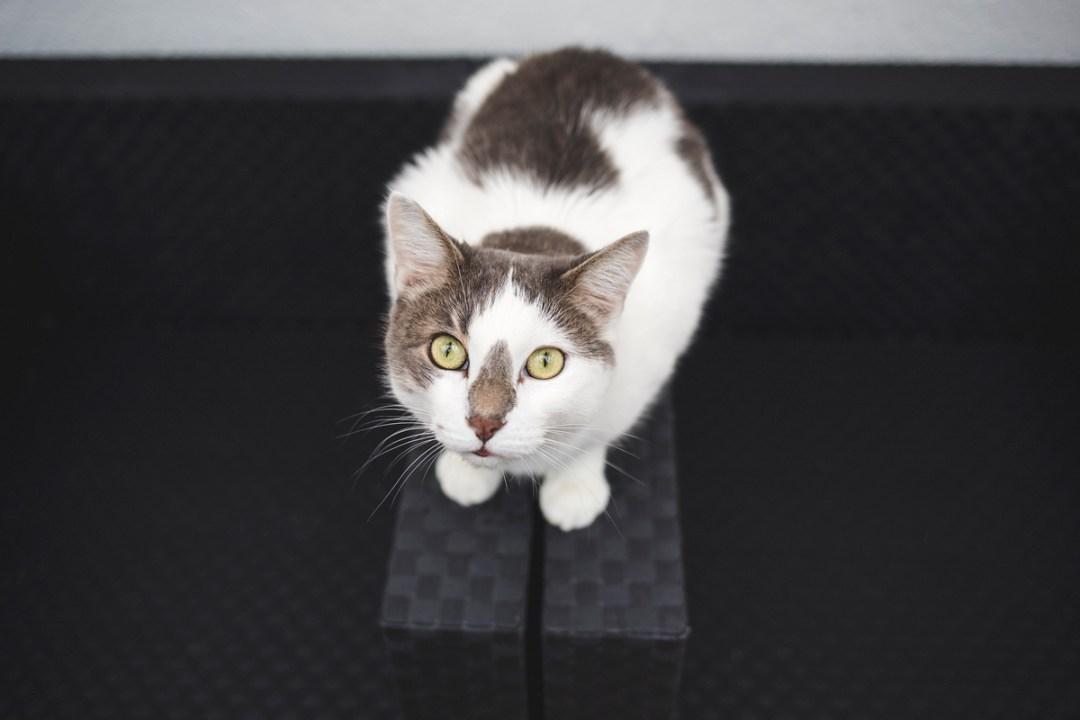 fotografo-de-mascotas-031-els-magnifics_gatos-lonabrugi