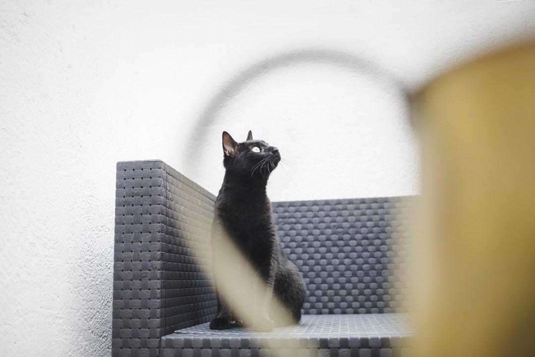 fotografo-de-mascotas-035-els-magnifics_gatos-lonabrugi