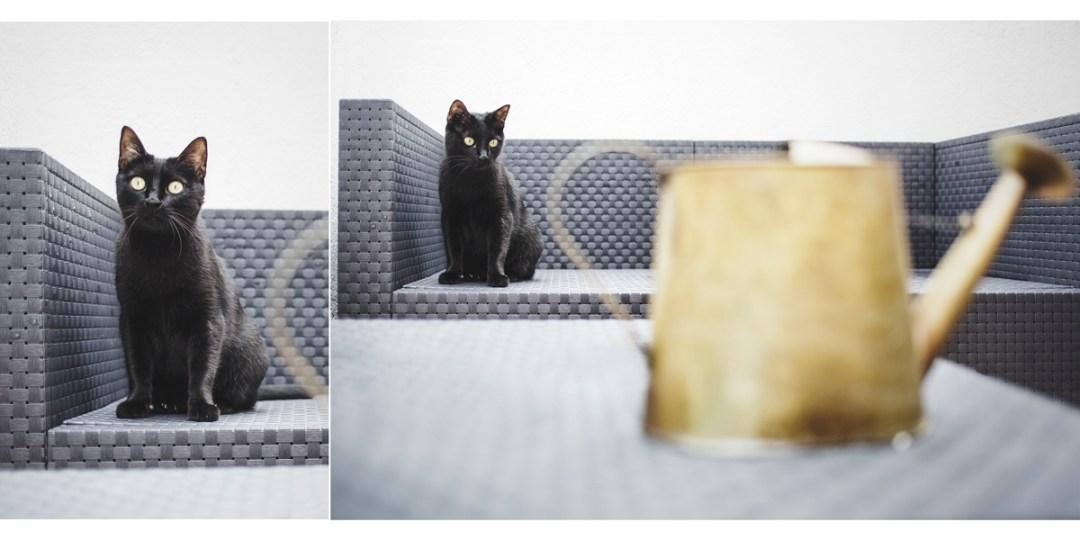 fotografo-de-mascotas-036-els-magnifics_gatos-lonabrugi