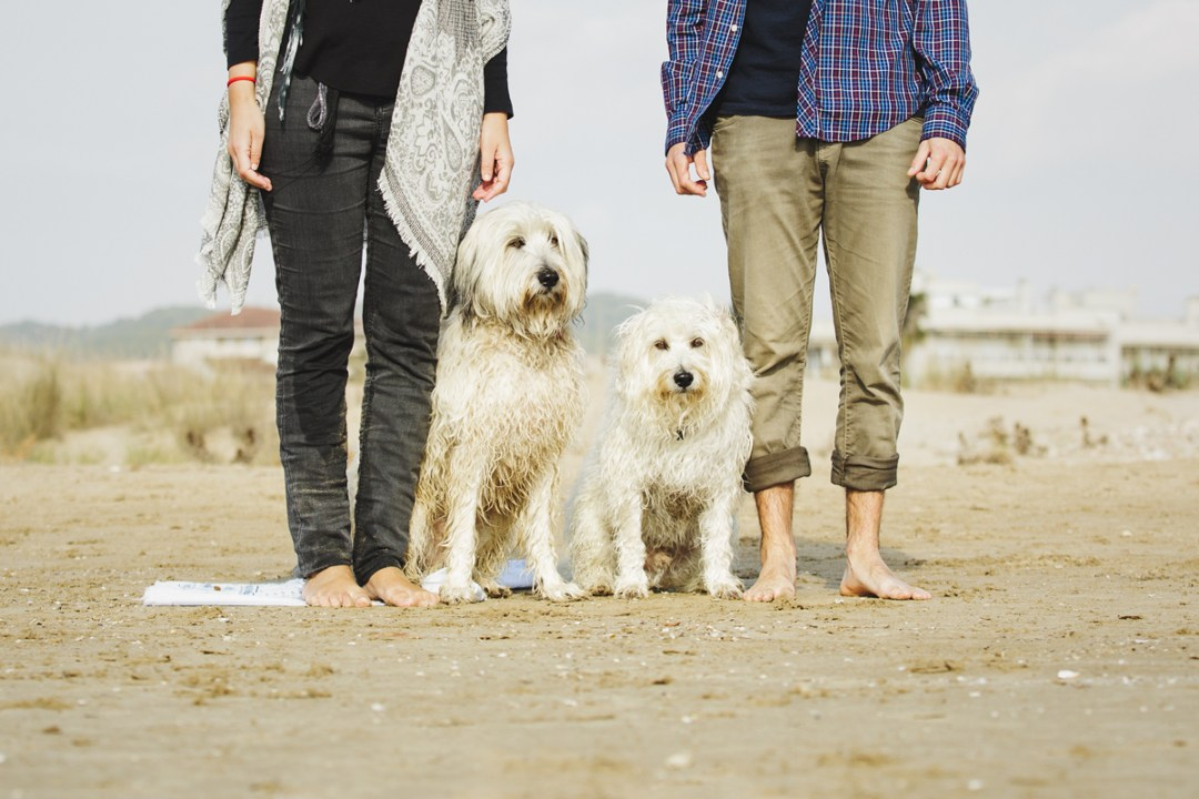 retrato gossos d´atura