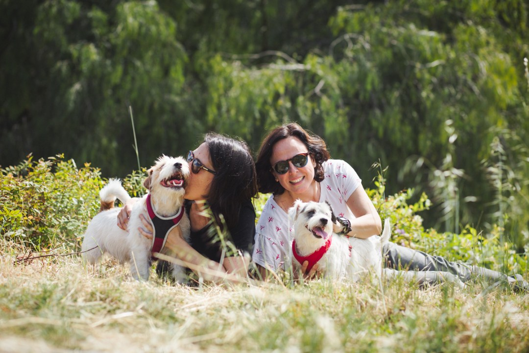 afortunadogs, jack russell con su familia en el parque