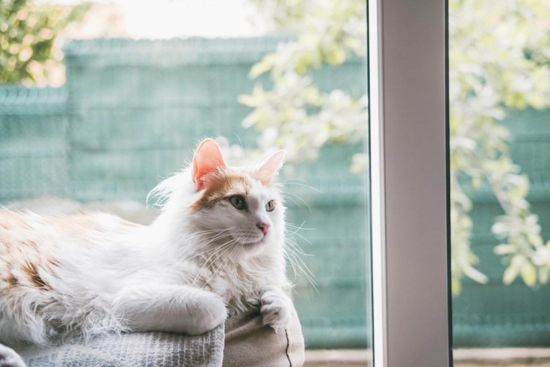 gato blanco junto a ventana