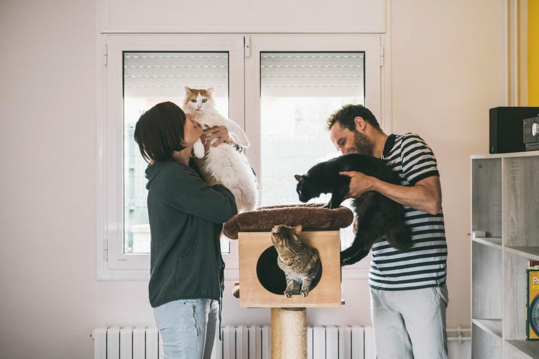 tres gatos y dos humanos