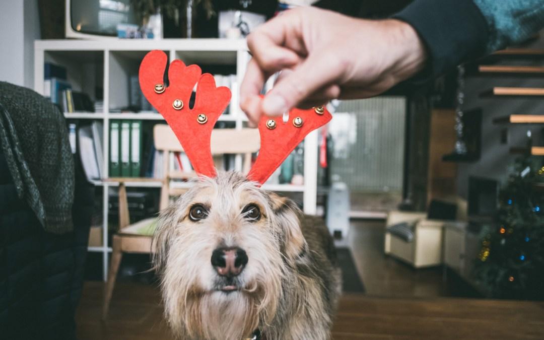 Fotógrafo de mascotas: Free, su primera Navidad