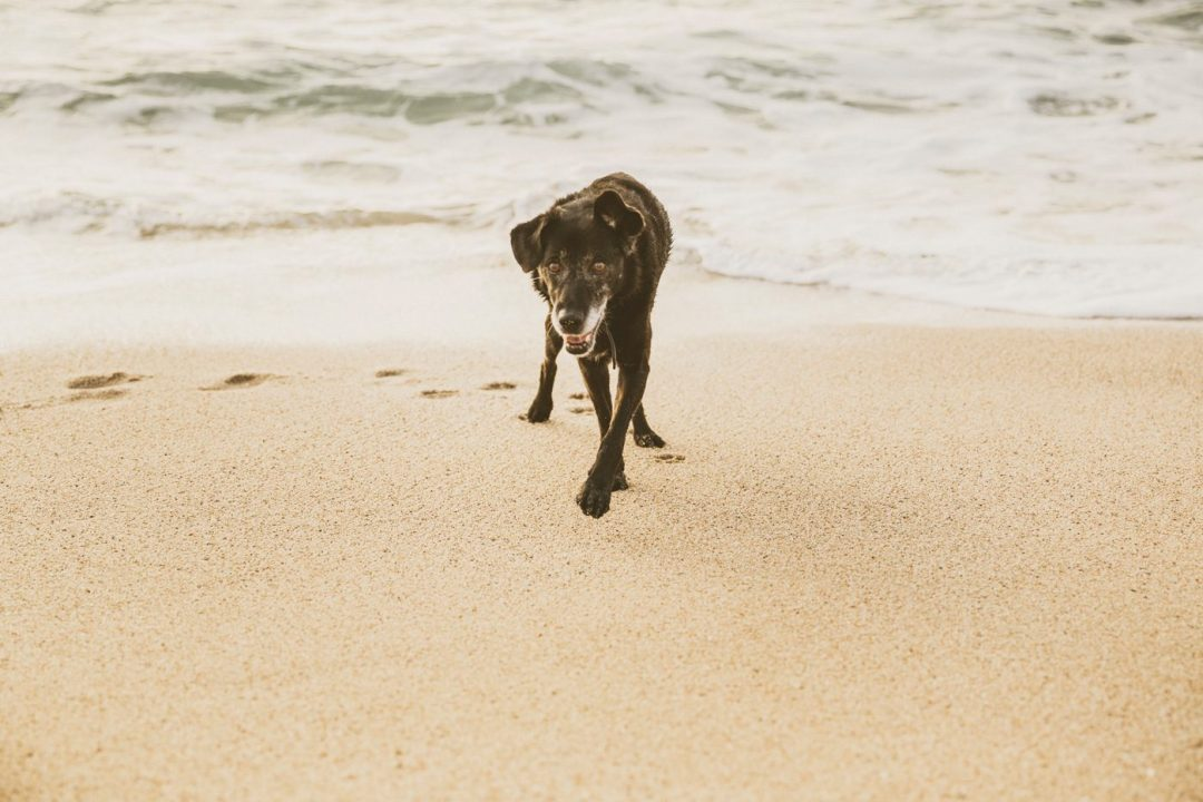 perro viejito en vilassar de mar
