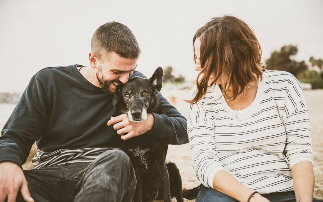 Fotógrafo de mascotas: 20 patitas en la playa… y claro! en el sofá