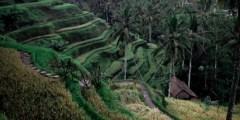 السياحة في بالي وأجمل 9 اماكن سياحية
