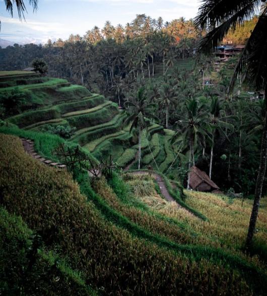 السياحة في بالي
