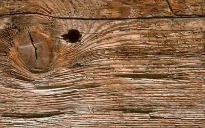 Consolidar la madera desinfectada