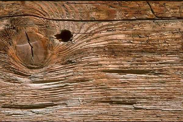 Consolidar la madera desinsectada
