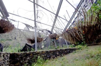 jardin botanico de vallehermoso 3