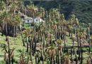 Tazo, en busca de la Miel de Palma (La Gomera)