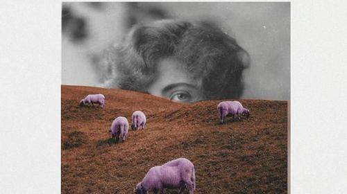 Pastoras del siglo XXI: ecofeminismo y cobertura móvil