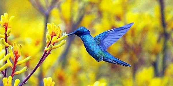 Resultado de la imagen para imagenes bellas de colibries