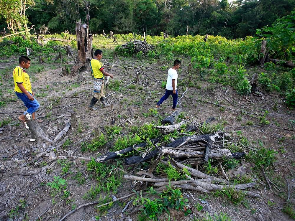 La deforestación de los bosques, en los resguardos, es una amenaza latente para esta comunidad indígena.