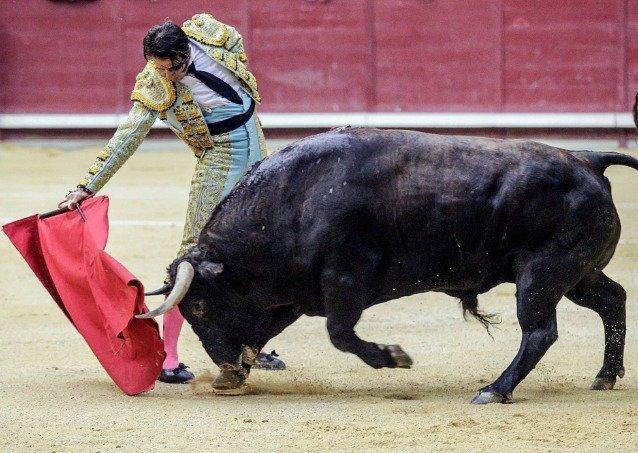 Toro arranca cuero cabelludo al torero Juan José Padilla en España