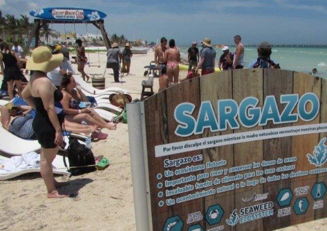 "Sargazo en Progreso problema, ""no tan grave"" como en Quintana Roo"
