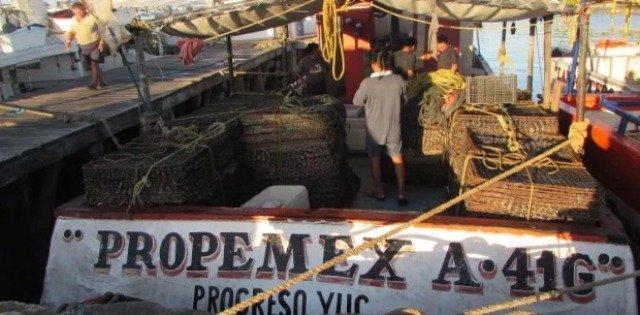 Arribaron con 600 kilos de langosta