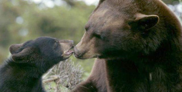 foto osos
