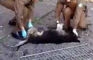 Perro muere tras ser lanzado desde el tercer piso de un edificio en Chile