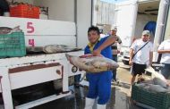 Mejora la pesca