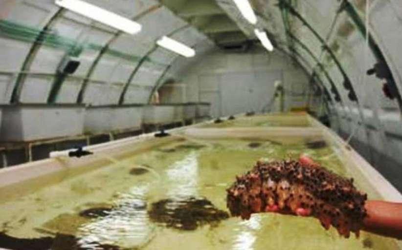 Rechazo al proyecto de cultivo de pepino de mar