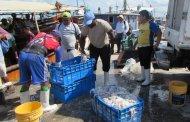 Los malos tiempos afectan la pesca de pulpo