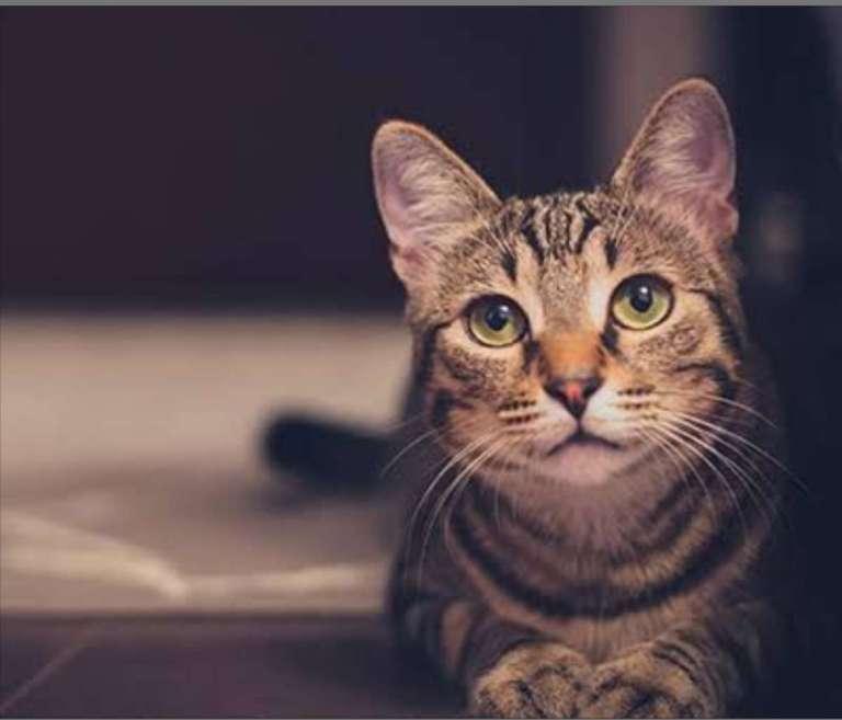 Foto gatos