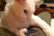 Atrapan a un gato entrenado para meter celulares dentro de la cárcel en Costa Rica