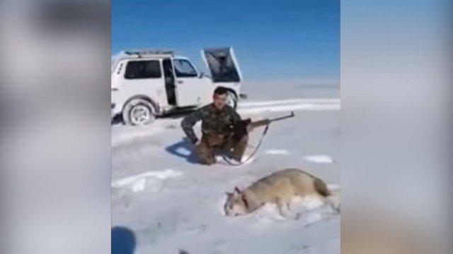 foto lobo ataca a cazador