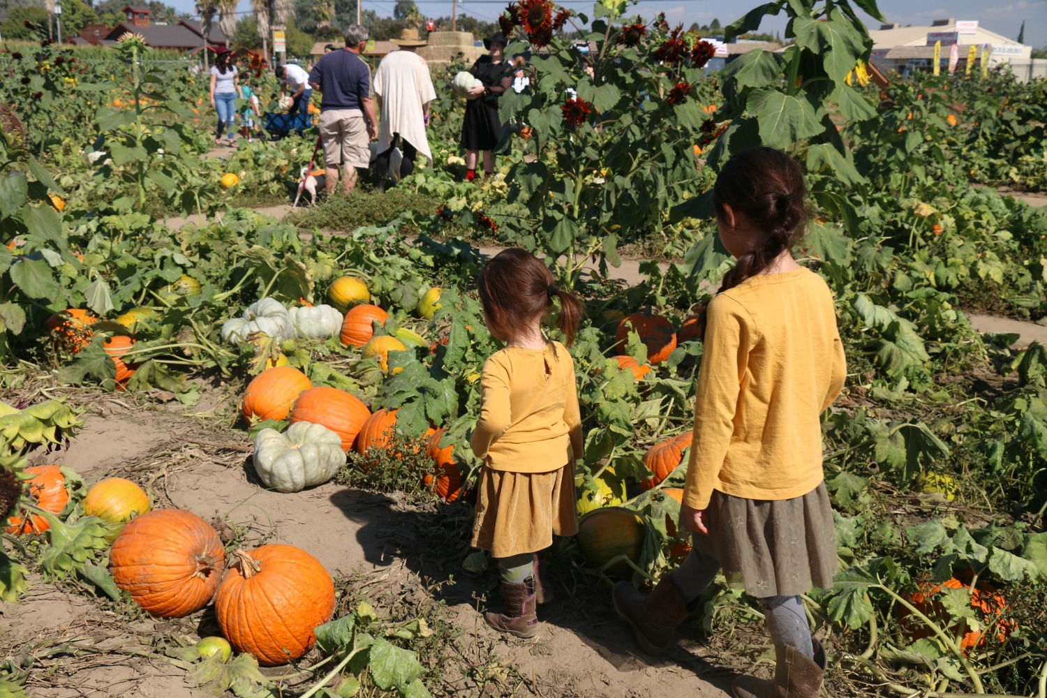 Pumpkin-Patch-tips-for-families