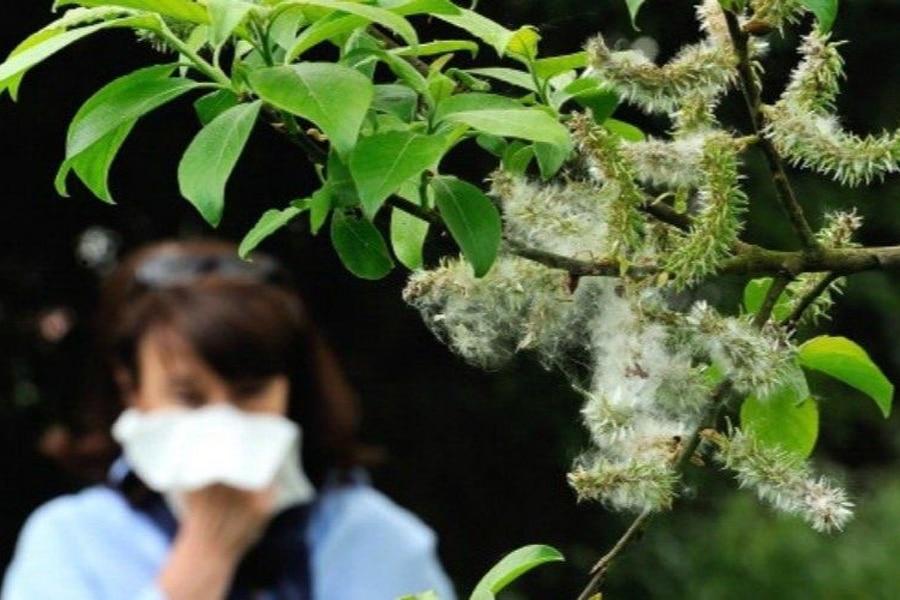 La importancia del arbolado en las alergias estacionales