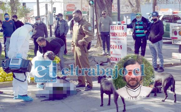 Personal del SAMU efectuando maniobras de reanimación, mientras son observados por los dos perros de la víctima que permanecieron a su lado hasta el final.