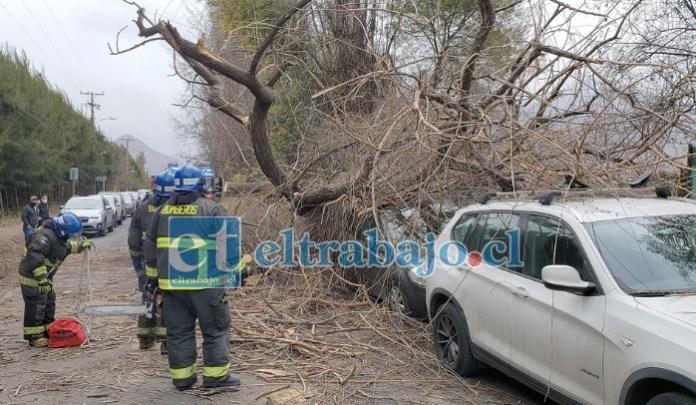 SALVARON DE MILAGRO.- Personal de Bomberos de la Quinta Compañía de Curimón atendió la insólita emergencia.