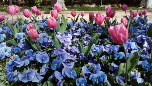Creatividades con flores secas ¡es primavera!