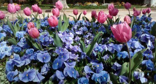Flores secas, manualidades