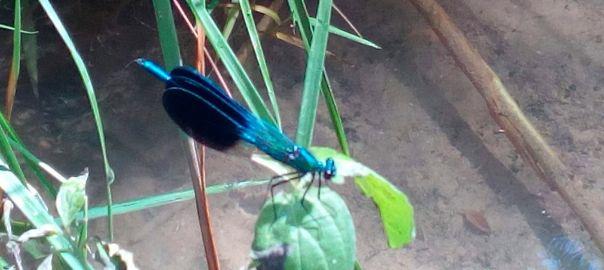 Las libélulas y su simbología