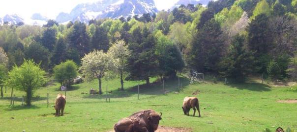 Lacuniacha parque faunístico Pirineos