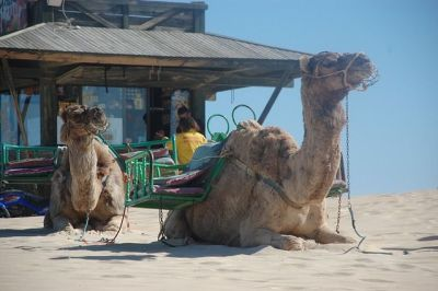 Excursiones en camello Canarias