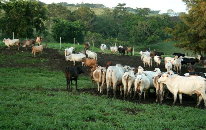 Resultado de imagen para extorsion a ganaderos