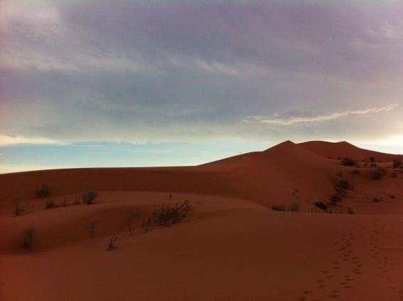 desert-sonora.jpg